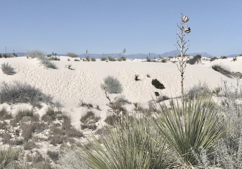eine halbe Fahrstunde vom Mescalero Apache Reservat entfernt: White Sands in New Mexico, weiße Gipswüste und Kulisse vieler Western